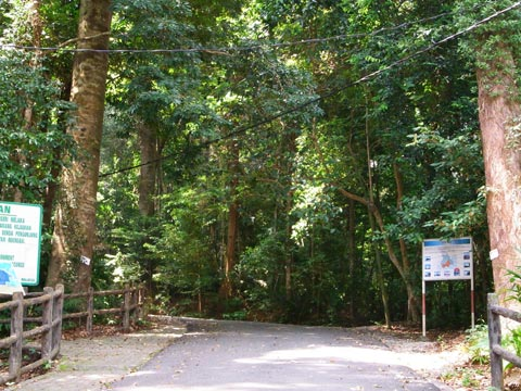 Tanjung Tuan forest reserve
