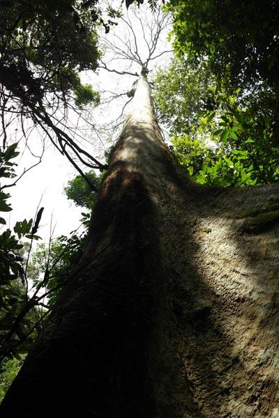 Looking up a tualang