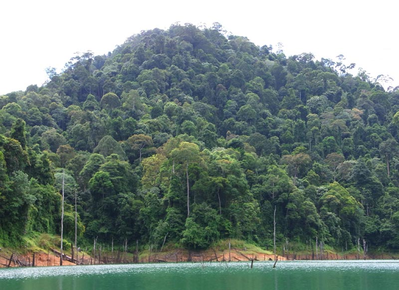 Kenyir Lake rainforest