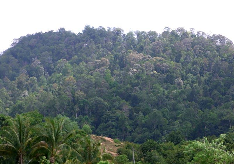 Hill dipterocarp forest in Negeri Sembilan