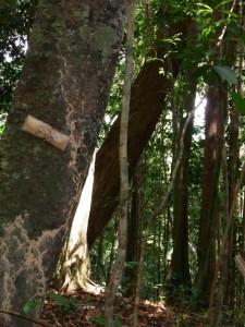 Jungle trekking in Sungai Relau
