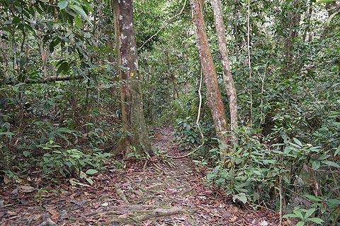 Ngeram trail