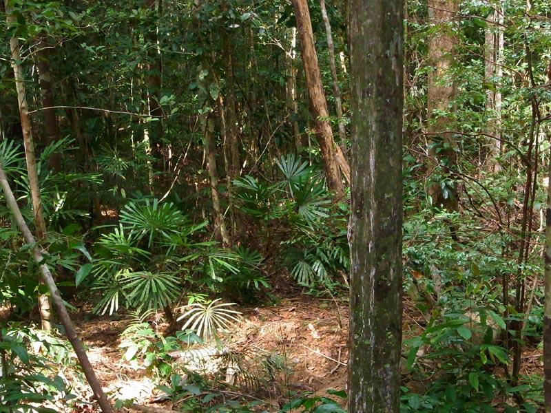 Palas Trail