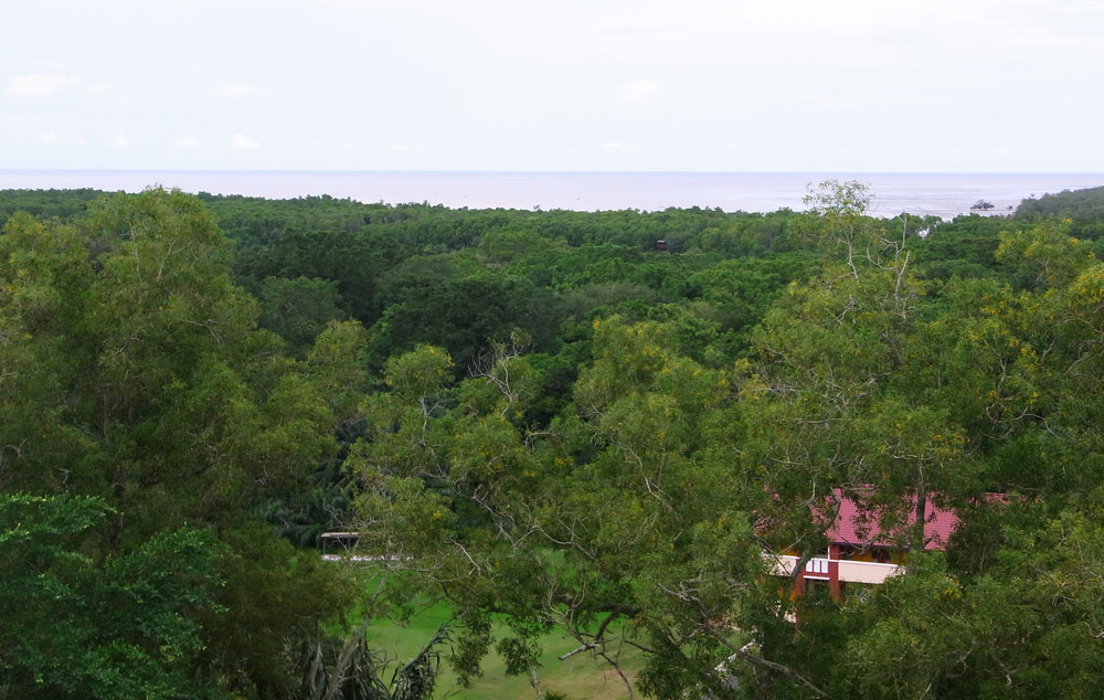 Kuala Selangor Nature Park panorama