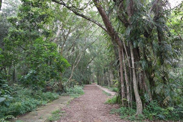 Kuala Selangor Nature Park trail