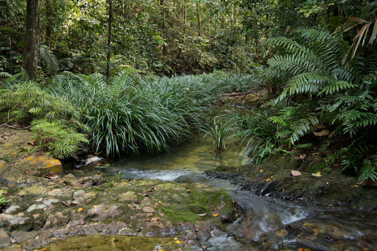 Stream in the Ayer Hitam forest