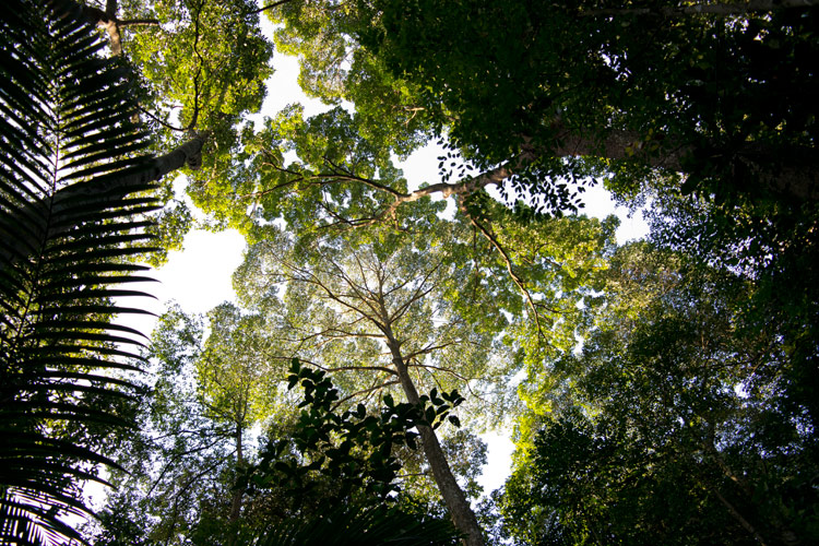 Puchong rainforest looking up