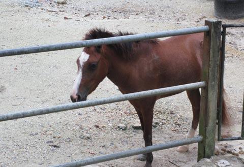 pony in taman botani negara
