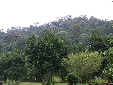 TBNSA primary forest