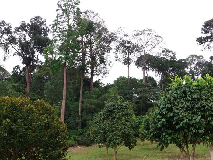 TBNSA arboretum