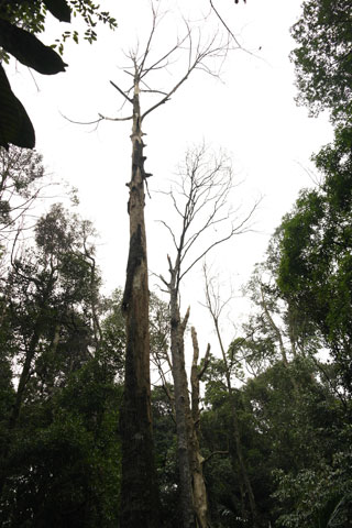 Large gap caused by dead trees.