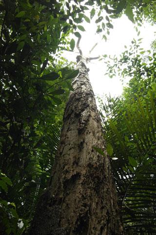 dead-tree3