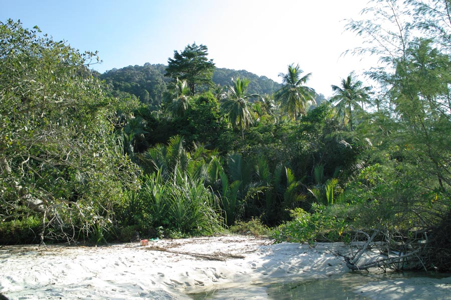 Beach forest in Penang