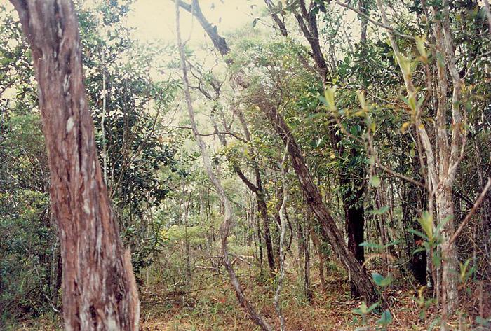 Gunung Jerai forest