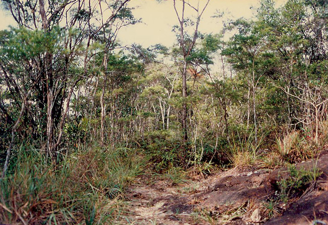 Trail through Jerai forest