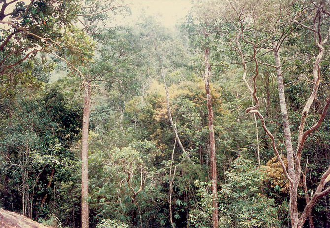 Forest around the Batu Kapal