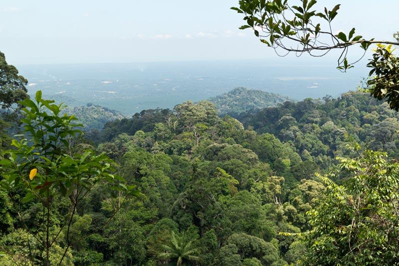 Gunung Pulai vista