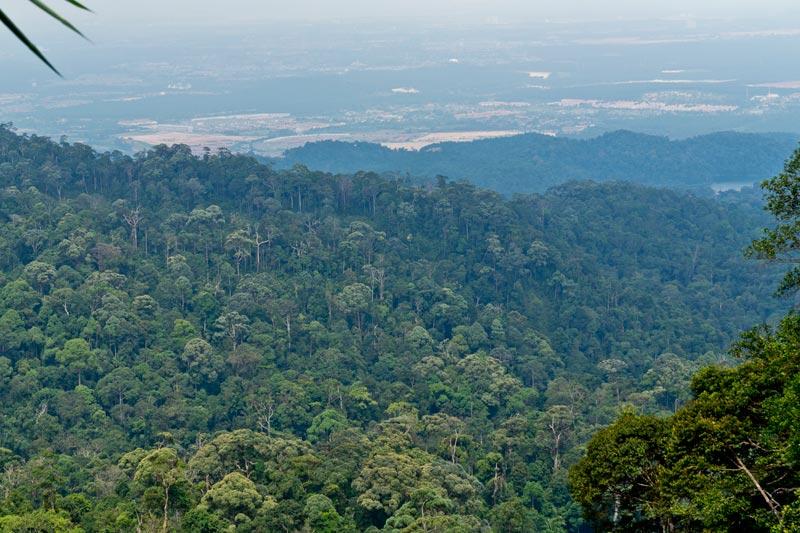 Gunung Pulai panorama