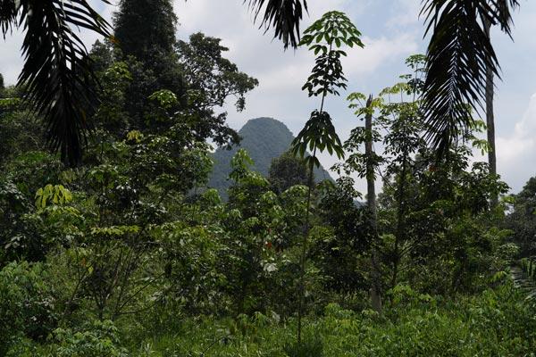 Gua Runtuh or Batu Baoh