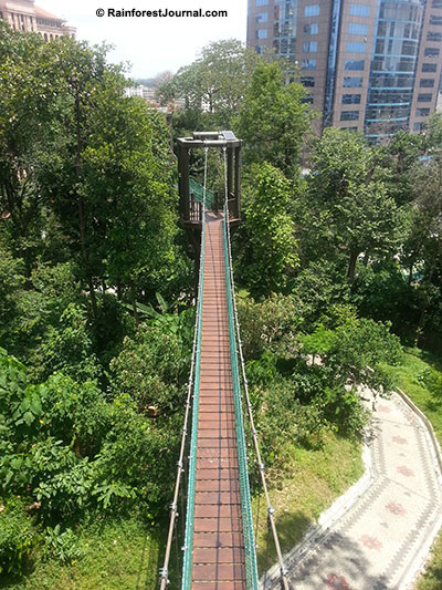 bukit nanas skywalk
