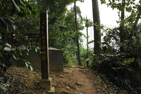 Jelutong Trail