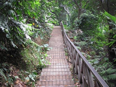 Stairs at Bukit Nanas