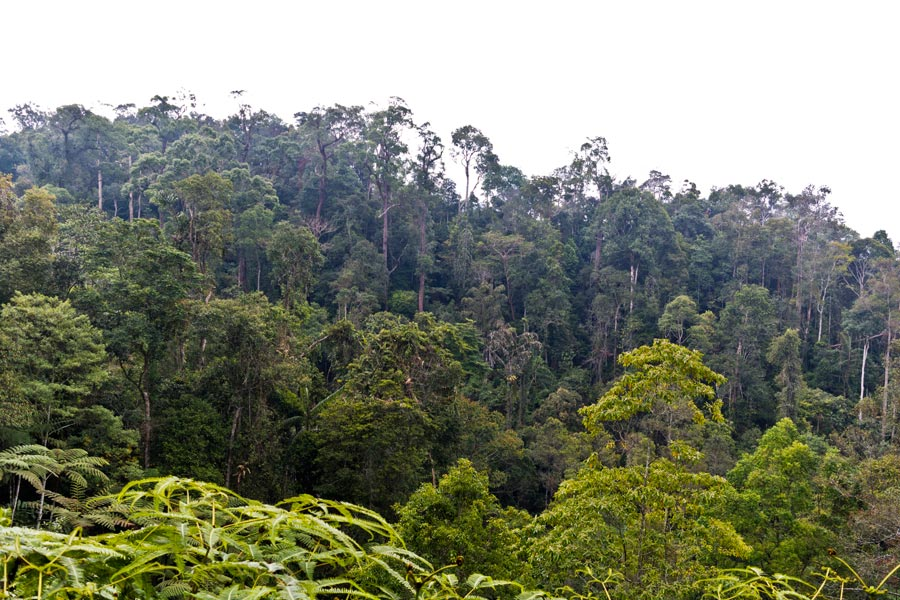 Lower montane rainforest