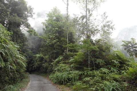 Road up Telapak Buruk