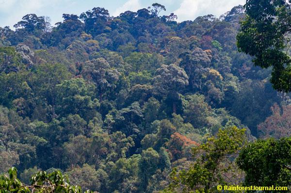 Endau Rompin rainforest