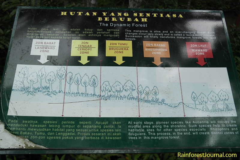 mangrove type zones