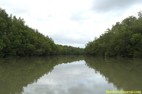 Upstream from Matang mangrove park jetty