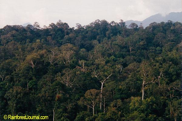 Emergent tree groupings