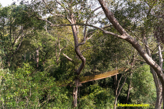 rainforest canopy walkway & Rainforest layers