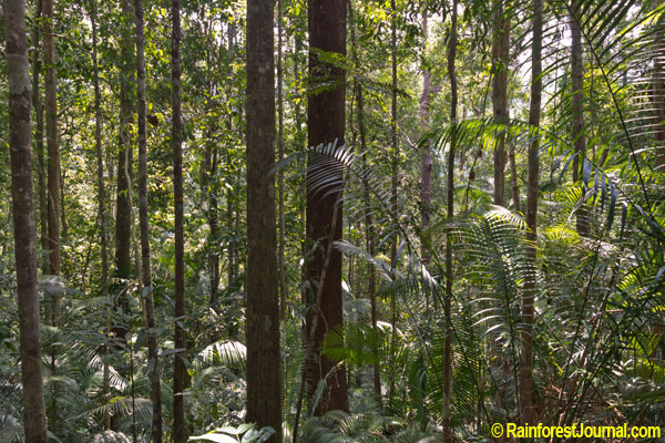 rainforest palm understory