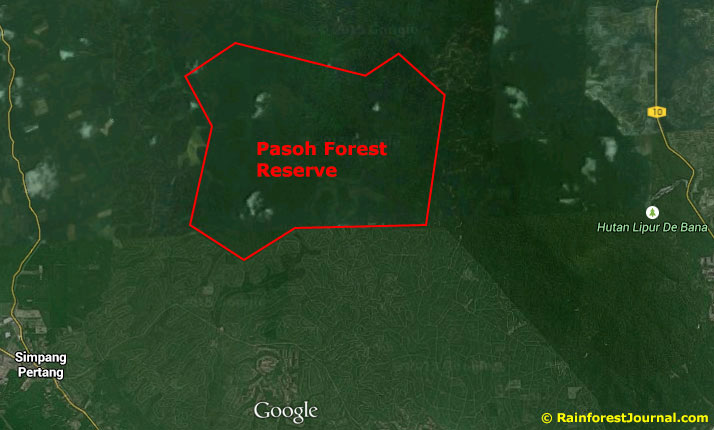 pasoh forest reserve