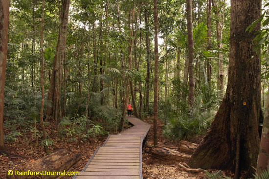 boardwalk trail in taman negara