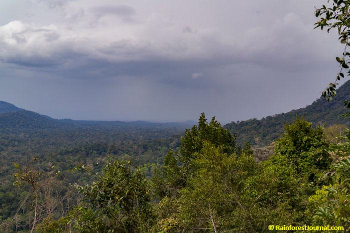 rain in taman negara