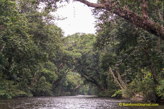 tahan river in taman negara