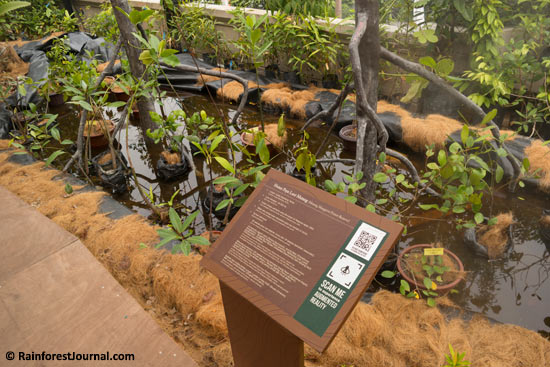 mangrove forest exhibit
